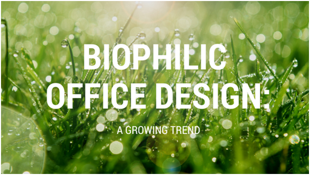Biophilic office design: A growing trend
